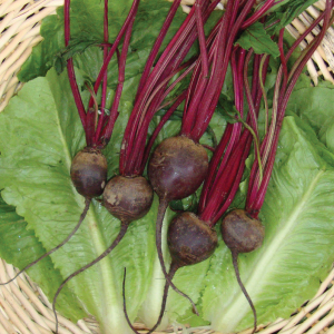 Detroit-Dark-Red-Beet-Seed.jpg
