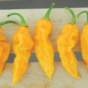 Devils-Tongue-Pepper-Seeds.jpg