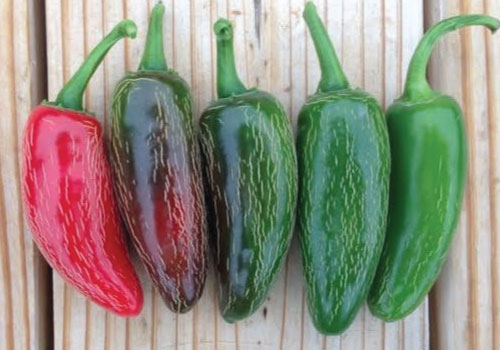 Early-Jalapeno-Peppers-Color-Turning.jpg