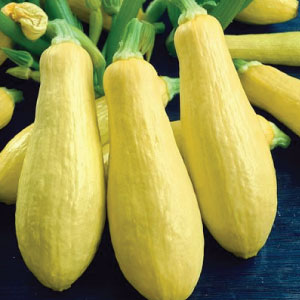 Early-Prolific-Straightneck-Squash-Seeds.jpg