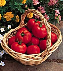 early_doll_tomatoes