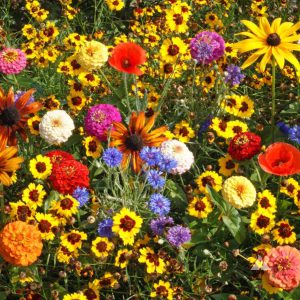 Easy Care Childrens Wildflower Seed