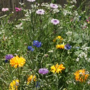 Edible-Flower-Wildflower-Seed-Mix.jpg