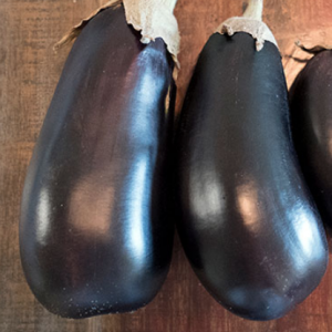 FLorida High Market Bush Eggplant Seeds