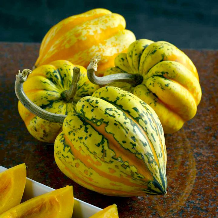 festival-f1-winter-squash-seeds