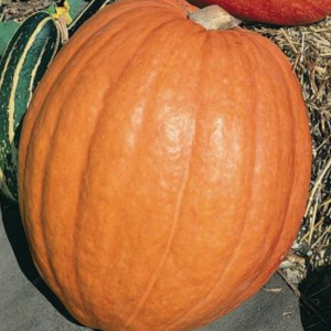 First Prize Pumpkin