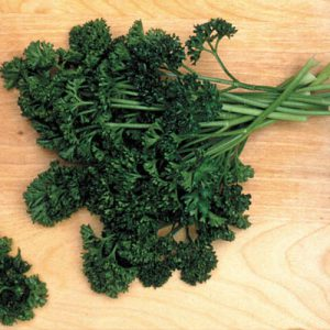 Forest_Green_Parsley_Seeds.jpg