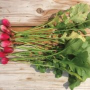 French-Breakfast-Radishes.jpg