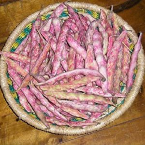 French Horticulure Bean Seeds-01