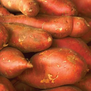 Georgia-Jets-Sweet-Potato-Slips.jpg