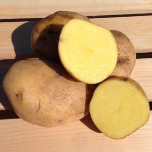 German-Butterball-Seed-Potato-Cut.jpg
