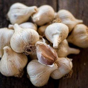 German-Extra-Hardy-Garlic-Seed