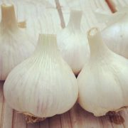 German-Porcelain-Garlic-Bulbs.jpg