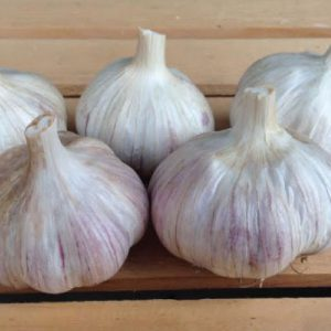 German-Red-Garlic-Bulbs