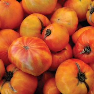 german-striped-tomato-seeds