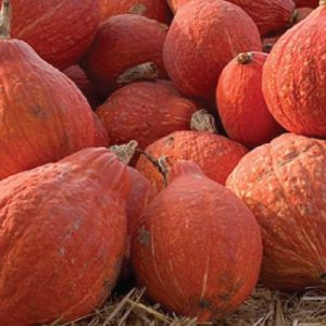 Golden-Hubbard-Squash-Seeds.jpg
