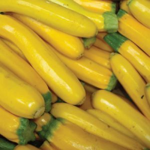Golden-Zucchini-Seeds.jpg