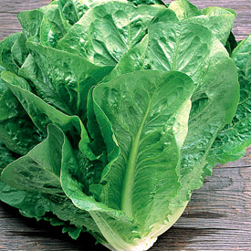 Green_Towers_Lettuce.jpg