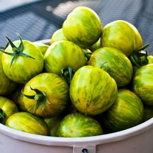 green_zebra_tomatoes
