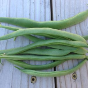 Greencrop-Bean-Seeds.jpg