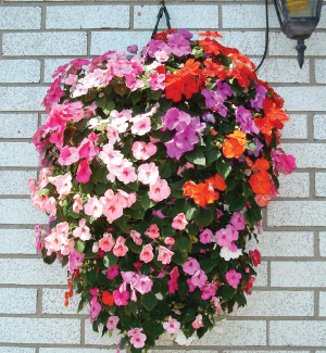 Hanging Flower Pouch Containers Urban Farmer Seeds