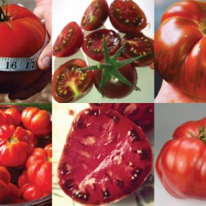 Heirloom-Tomato-Collection.jpg