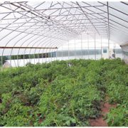 High_Tunnel_Greenhouse_4.jpg