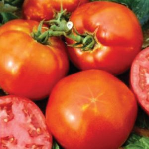 Homestead-Tomatoes.jpg