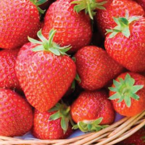 Honeoye-Strawberry-Plants.jpg