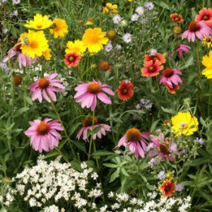 Honey-Bee-Wildflower-Seed-Mixture.jpg