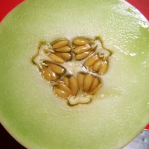 Honeydew-Green-Flesh-Melon