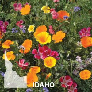 Idaho-Wildflower-Seed.jpg