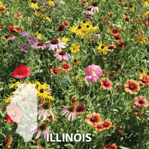 Illinois-Wildflower-Seed.jpg