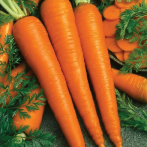 Imperator-58-Carrot-Seeds.jpg