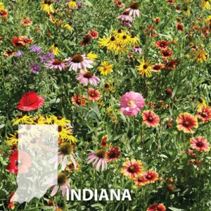 Indiana-Wildflower-Seed.jpg