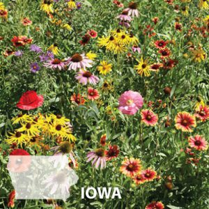 Iowa-Wildflower-Seed.jpg