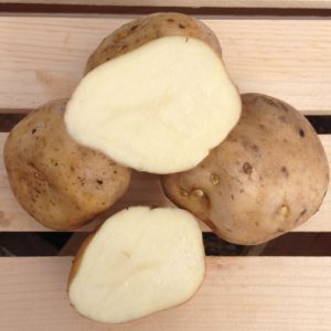 Irish-Cobbler-Seed-Potato-Cut.jpg