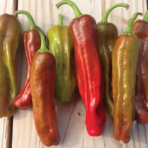 italian-pepperocini-pepper-seeds