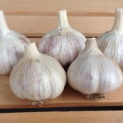 Italian-Purple-Garlic-Bulbs.jpg