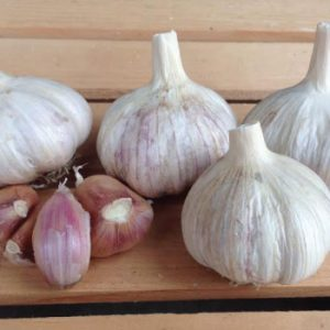 Italian-Purple-Garlic-Cloves.jpg