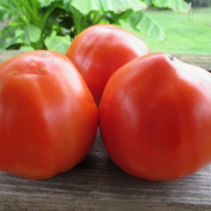 Italian_Heirloom_Tomato_Seeds.jpg