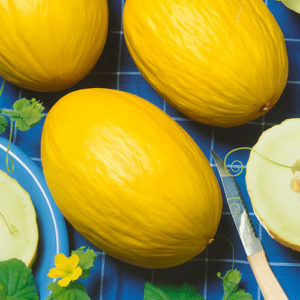 June Canary Melon