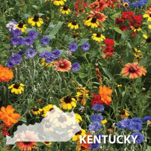 Kentucky-Wildflower-Seed.jpg