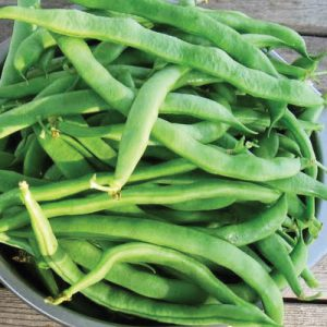 kentucky-wonder-125-bush-bean-seeds