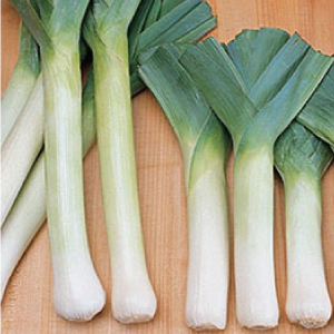 King-Richard-Leek.jpg