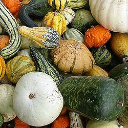 Large-Mix-Gourd_Seeds.jpg