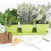 Lime-Sherbet-Metal-Complete-Herb-Kit.jpg