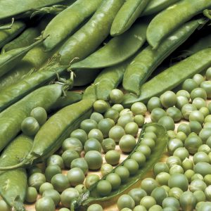 Lincoln Pea Seeds