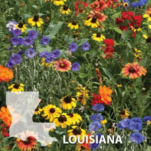 Louisiana-Wildflower-Seeds.jpg