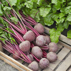 Lutz Green Leaf Red Stem - Beet